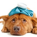 Precautions when adopting or buying a pet