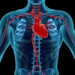 heart attack risk higher in winter