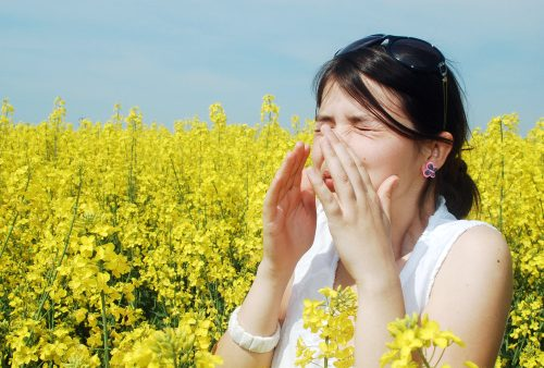 Fall allergies vs. spring allergies