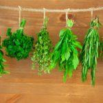 herbs-for-brain-health