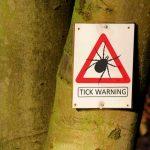Lyme disease hard to diagnose