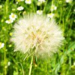 type of pollen