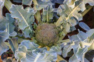 best cell regeneration foods