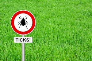 Diagnosis of Lyme disease