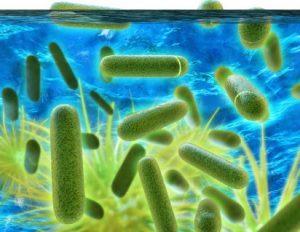 Legionnaire's Disease