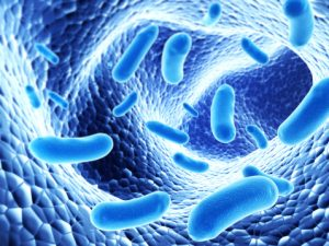 New study reveals cytoprotective ability of certain bacteria