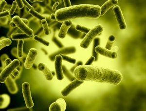 Good cholesterol (HDL) levels affected by gut bacteria