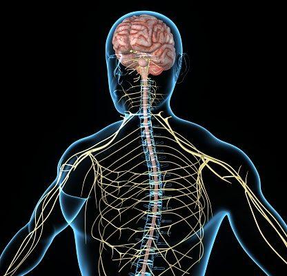 Autonomic neuropathy in diabetic neuropathy, effect on hypoglycemia symptoms