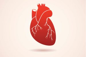 Heart disease risk factor, heart aging, differs in men and women