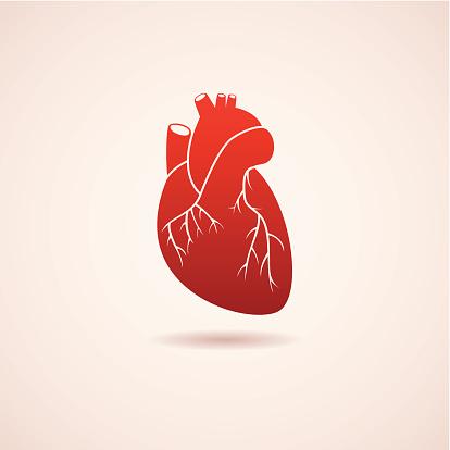 Heart disease risk factor, heart aging, differs in men and women