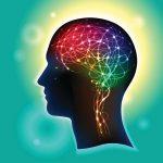 Brain-receptors-