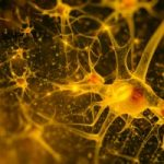 Parkinson's Prevention