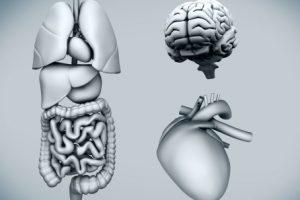 Enlarged spleen (splenomegaly) causes, symptoms, spleen pain and treatment