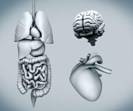 Disturbs the spleen: symptoms of the disease