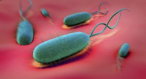 H. pylori bacteria elimination can help reduce risk of stomach ulcers, gastritis and gastric cancer