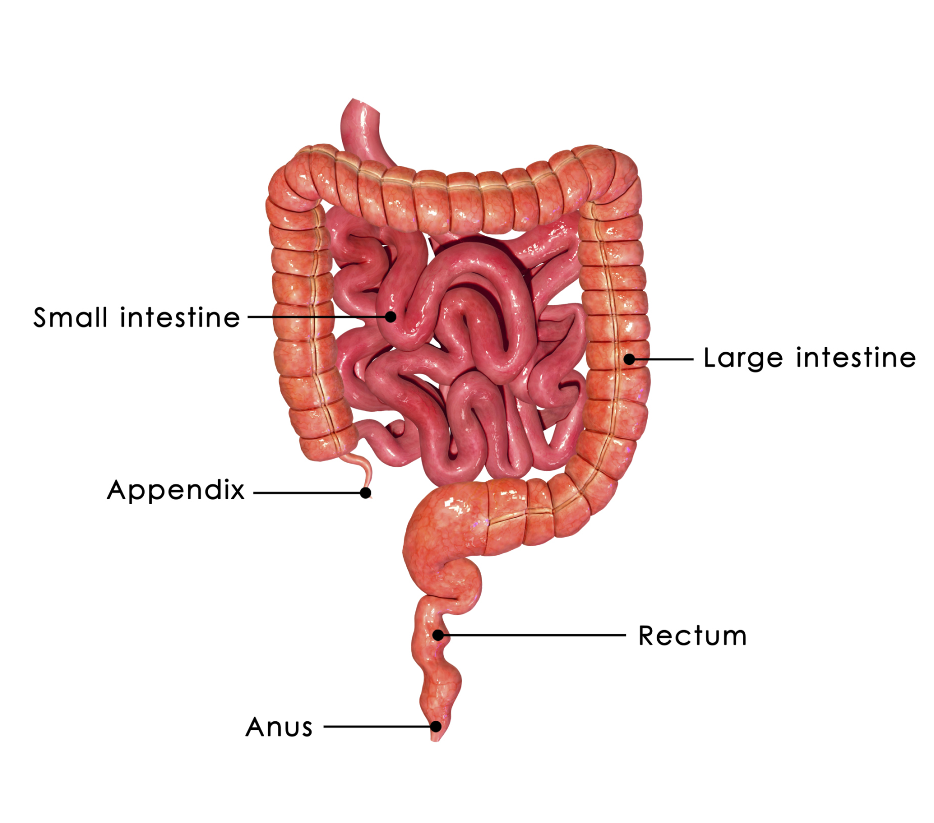natural treatment for the disease bowel disease down