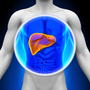 enlarged liver (hepatomegaly): causes, treatment and prevention tips, Skeleton