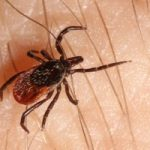5lyme-disease-can-prevent-immune-system-from-developing-lasting-immunity-300x200