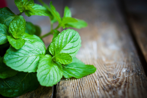 Irritable bowel syndrome pain relieved by spider venom, peppermint