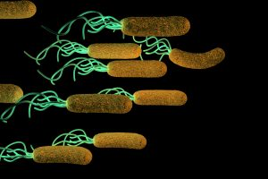 Multiple sclerosis risk in women may reduce with stomach ulcer bacteria H.pylori: Study