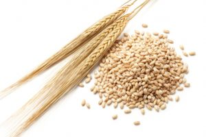 barley grain heart health
