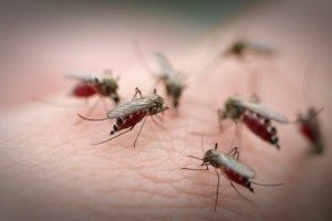 Zika virus, dengue, and malaria risk