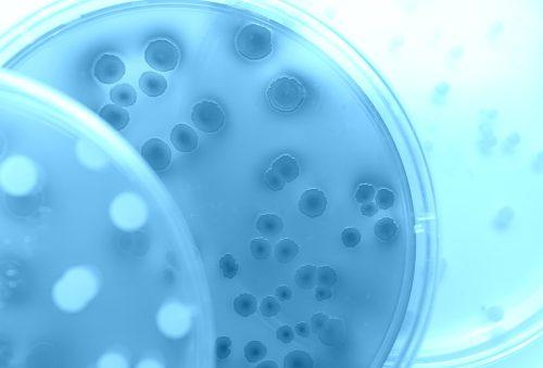 Norovirus vs. E. coli