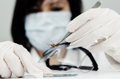 west nile zika virus mosquitoes