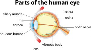 keratoconus cornea distortion in the eye
