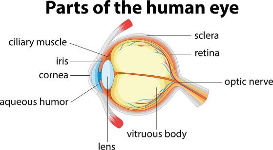 keratoconus cornea distortion in the eye