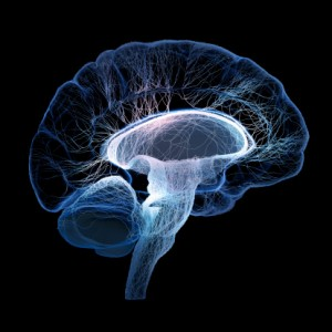 Multiple sclerosis and overactive bladder cause reduction in brain serotonin and cortisol levels: Study