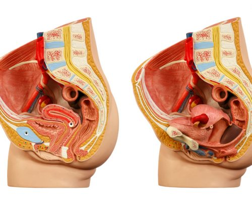 pelvic organ prolapse risk increases with high bmi after pregnancy