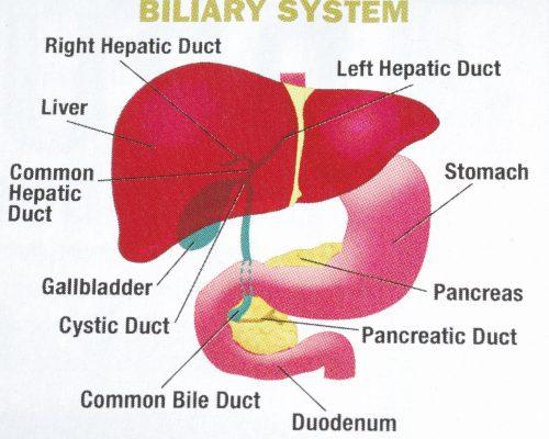 what is bile acid reflux