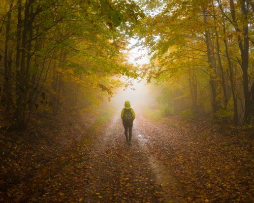 wandering in dementia patients