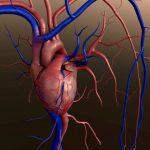 Heart valve disease diagnosis, treatment, and preventive measures