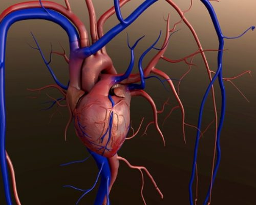 Heart valve disease diagnosis, treatment, and preventive measures