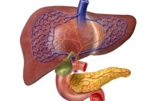 Non-alcoholic fatty liver disease, new treatment found in a study