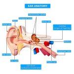 eustachian-tube-dysfunction