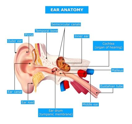 Eustachian tube dysfunction in adults: Causes and natural
