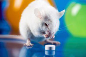 mice-glaucoma