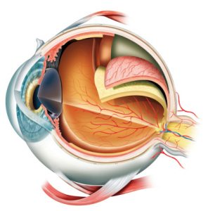 Light Flashes In The Eye Causes Symptoms And Treatment