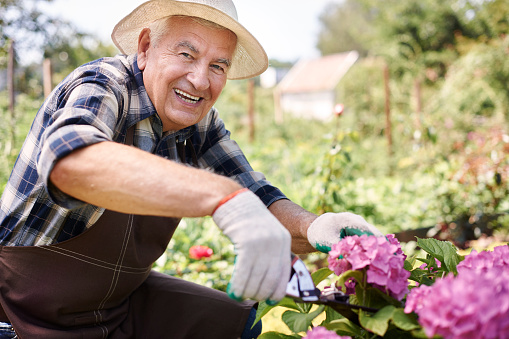 gardening health benefits