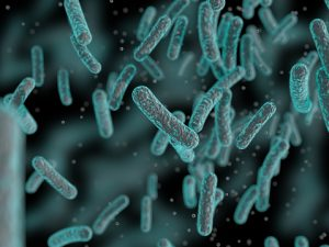 bacteria alzheimers disease