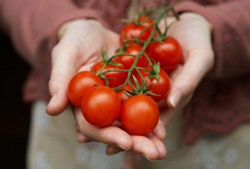 skin cancer tomatoes