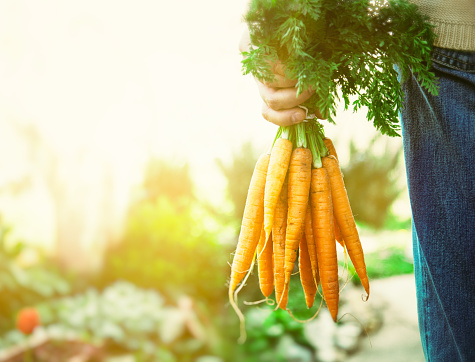 Do Carrots Really Improve Your Vision