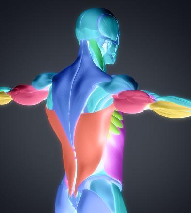 rhomboid muscle pain treatment