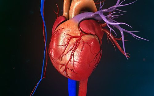 Right ventricular hypertrophy: Causes, symptoms, and treatment tips ...