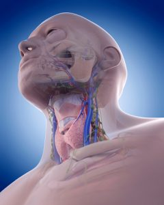 distended neck veins - DriverLayer Search Engine