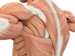 muscular system diseases
