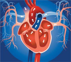 Natural Treatment For Left Atrial Enlargement